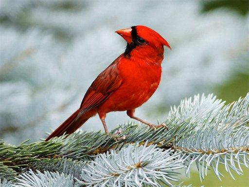 Ptice Puzzle
