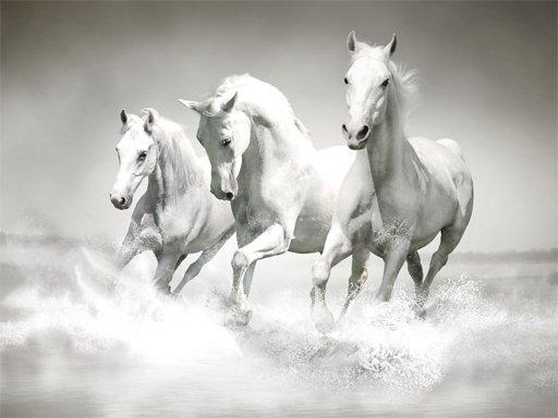 Konji slagalica